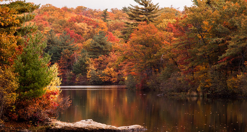 Climate Change Could Shift New England S Fall Foliage