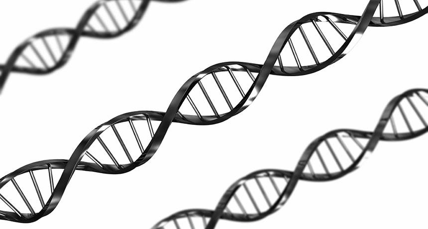 DNA folds