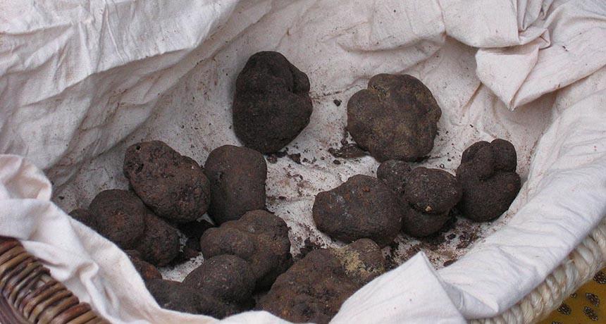 truffles in a basket