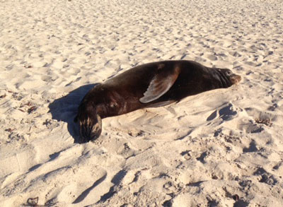 sea lion washed up on beach