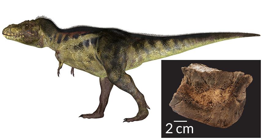 T. rex and bone