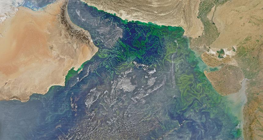 satellite image of plankton in Arabian Sea