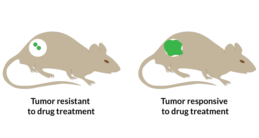 mouse tumor diagram