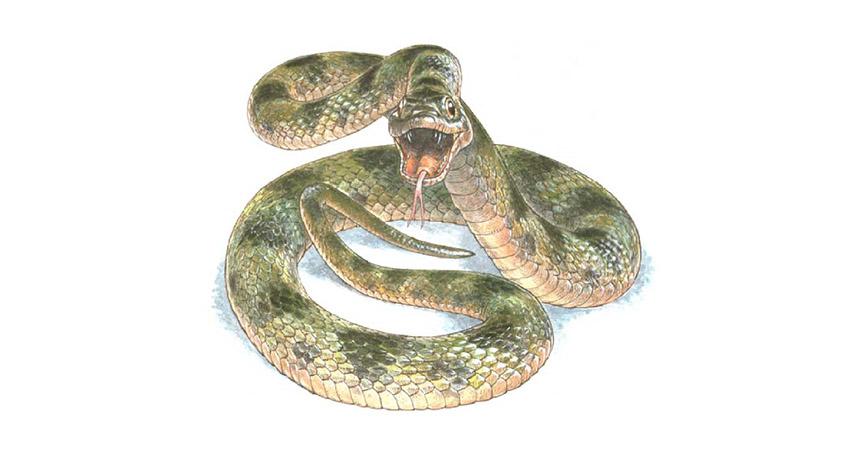 illustration of ancient snake