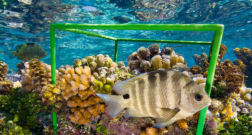 a coral reef in French Polynesia