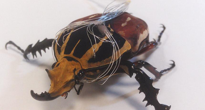 cyborg flower beetle
