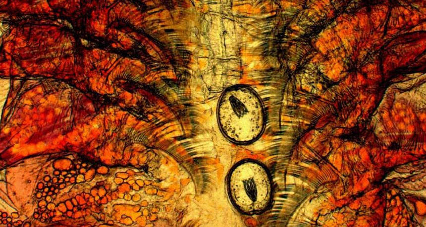 magnified image of brine shrimp tissue