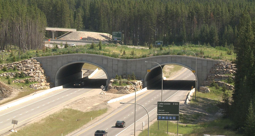 Wildlife overpass in Banff National Park