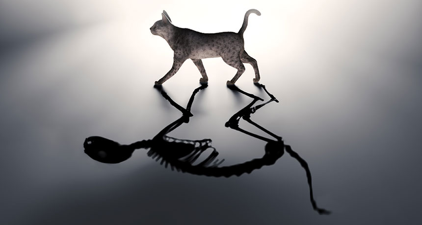 Illustration of a cat with skeleton shadow