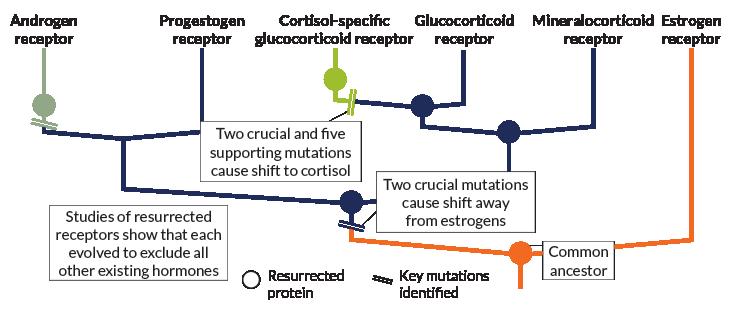 ancestral receptors