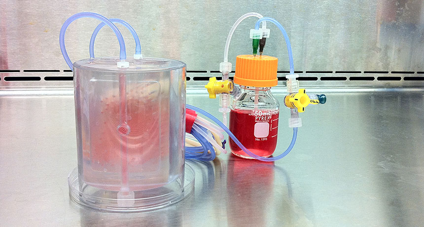 lab bioreactor used to grow bone graft
