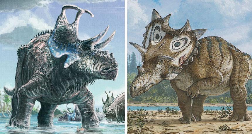 Machairoceratops cronusi and Spiclypeus shipporum