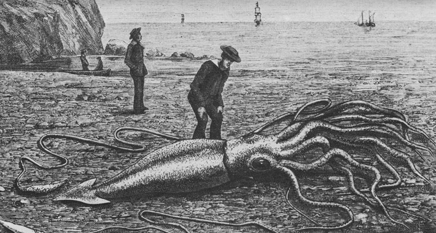 illustration of man looking at squid on shore