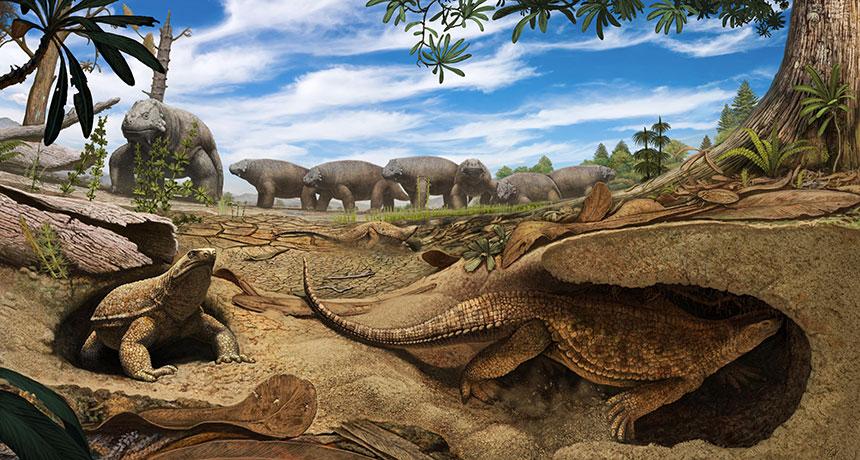 Eunotosaurus africanus illustration