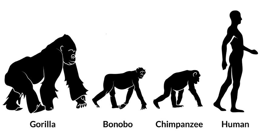 silhouettes of primates