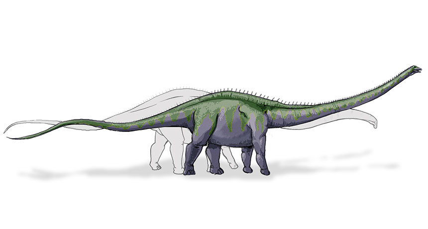 dinosaur illustration