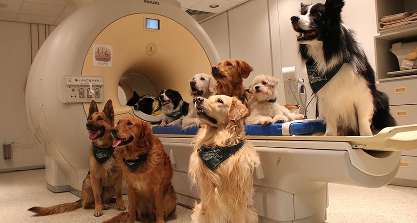 dogs with MRI machine