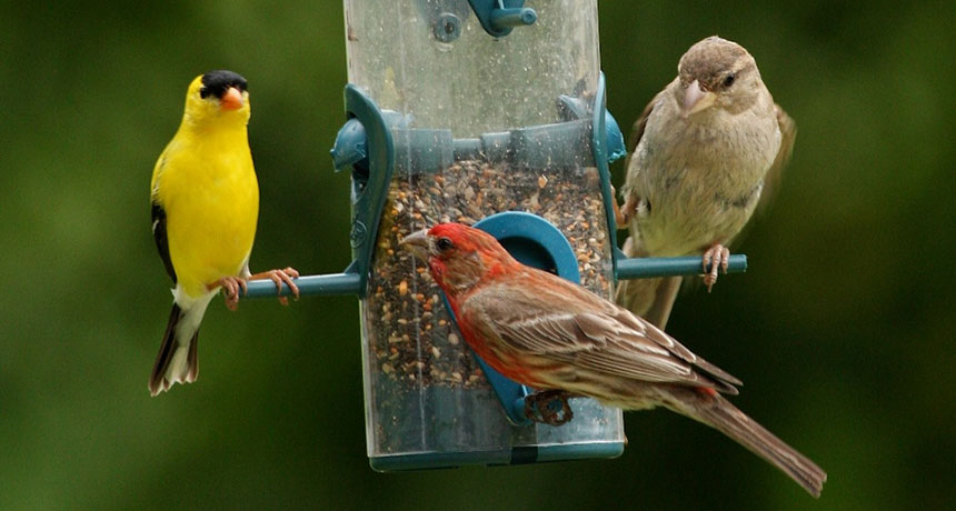 birds at birdfeeder