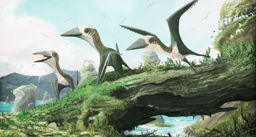 illustration of pterosaurs