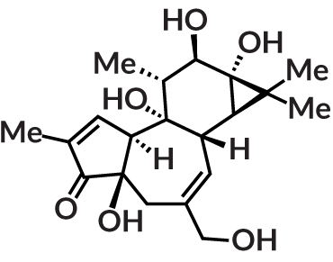 structure of the molecule phorbol