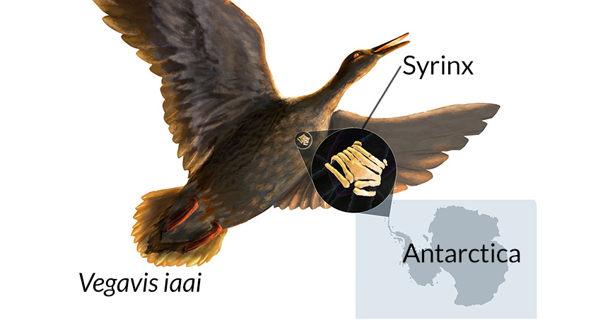 ancient bird diagram