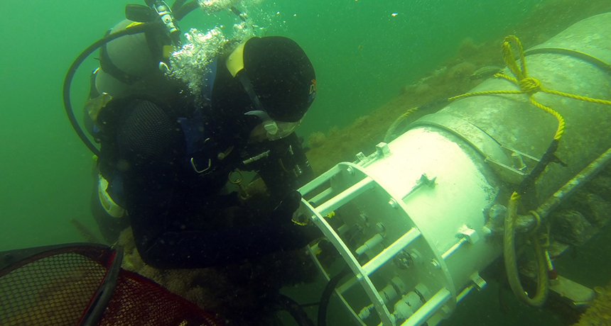 researcher scuba diving