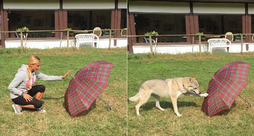 experiment with dog and umbrella