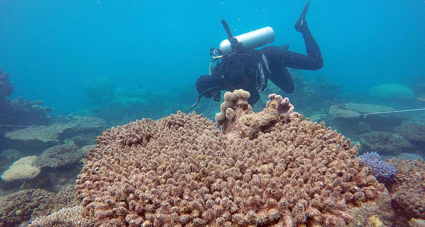 scuba diver near dead coral