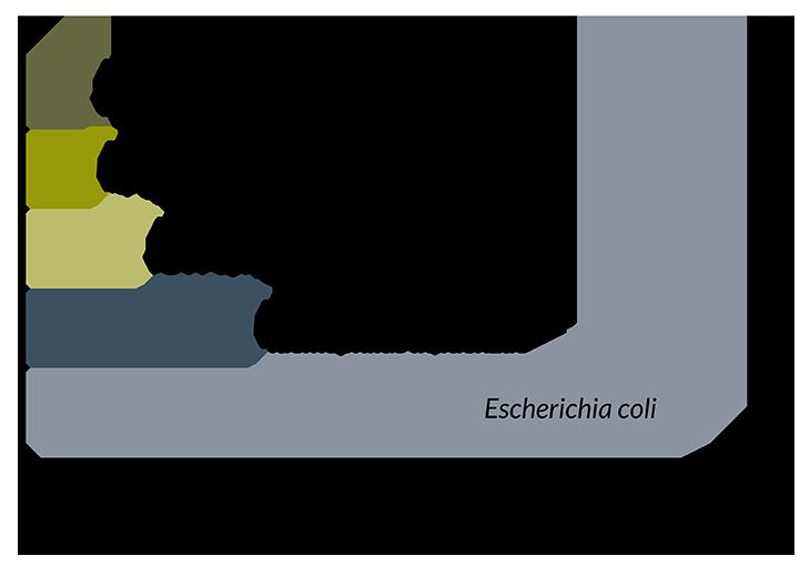 JCVIsyn3.0 graph
