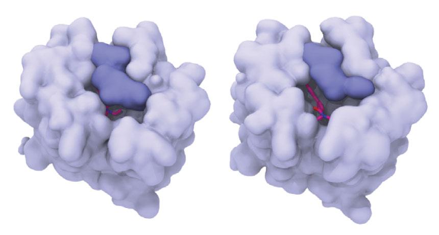 LSD in brain protein