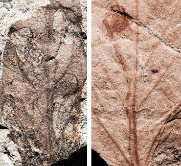 fossilized insect-feeding damage