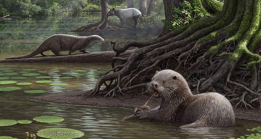 illustration of giant otters