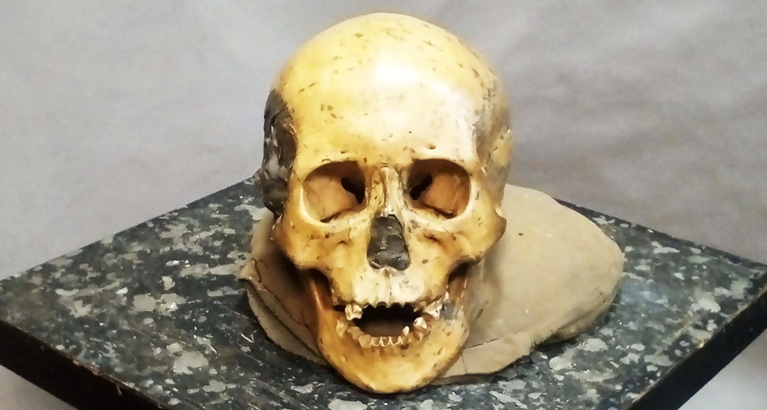 East Asian hunter-gatherer skull