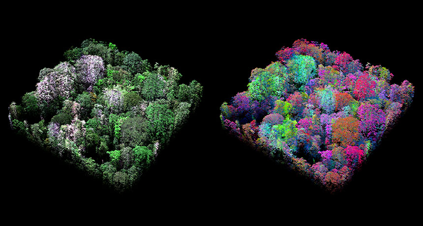 images of Peruvian tropical forest