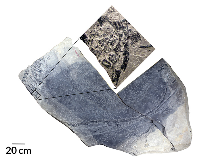 image of fossil