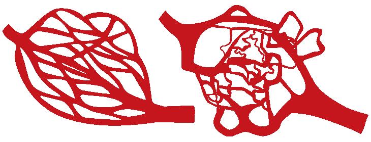 healthy versus cancerous tumor blood vessels