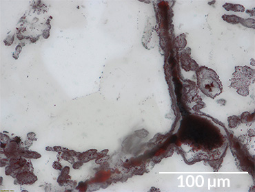 iron ore in microfossil