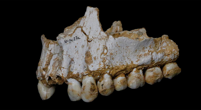 upper jaw from Neandertal