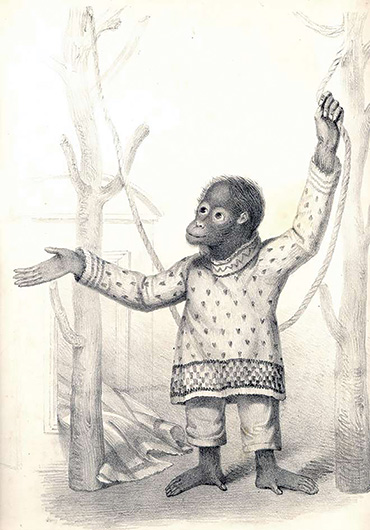Jenny the Orangutan