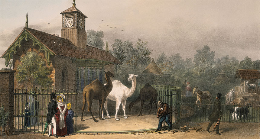 Gardens of the Zoological Society of London