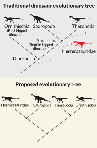 dino phylogeny