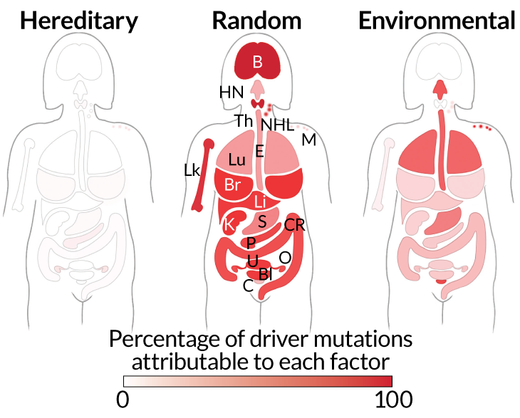 various types of mutations and cancers