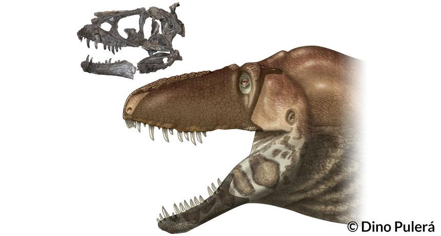 Daspletosaurus horneri tyrannosaur
