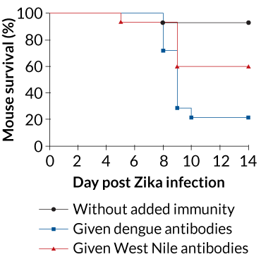 ONE-TWO PUNCH Outcomes of Zika infections for mice depended on whether certain viral antibodies were present in their systems. Most of the mice given plasma free of dengue or West Nile antibodies prior to being exposed to Zika survived. The opposite was true for most mice given plasma that contained dengue antibodies. A little less than half the mice given plasma with West Nile antibodies died.