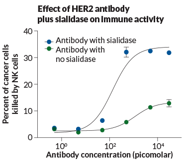 graph of HER2 anitibody plus sialidas on immune activity