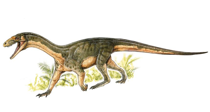 Teleocrater rhadinus