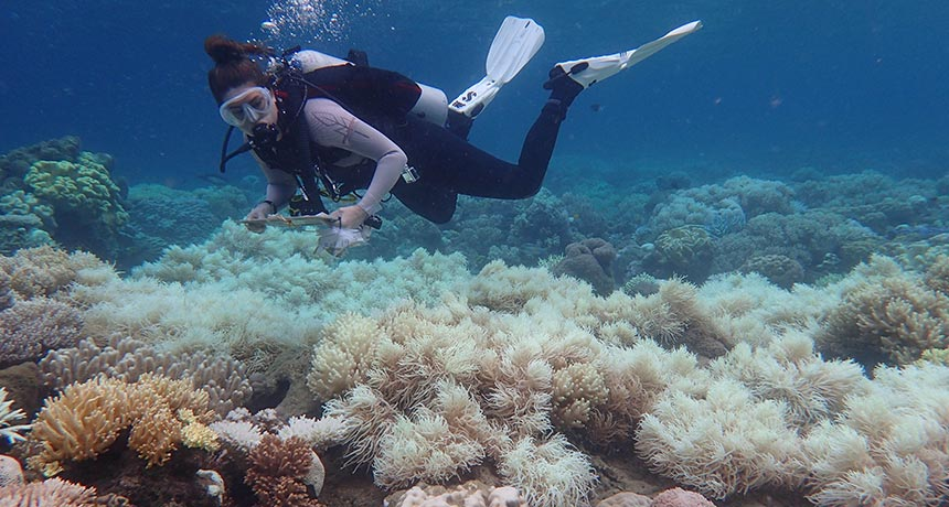 diver looking at bleached corals