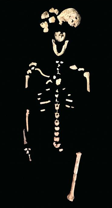 Homo naledi skeleton