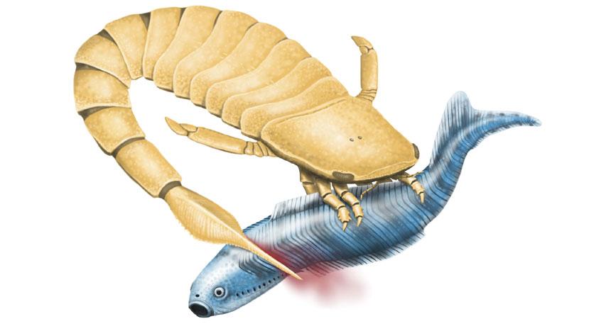sea scorpion illustration