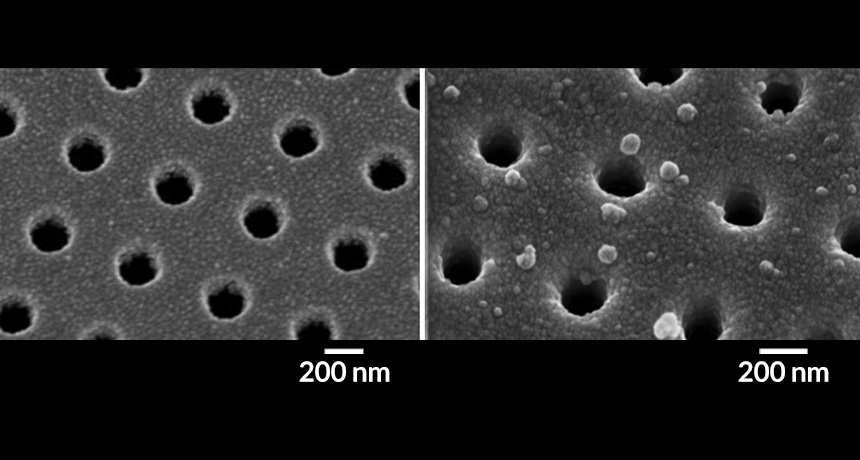 antibody-coated chip